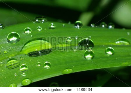Dewdrops On A Leave