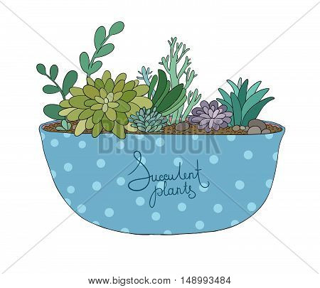 Succulents in pot. Agave, aloe and cactus. Hand drawing isolated objects on white background. Vector illustration.