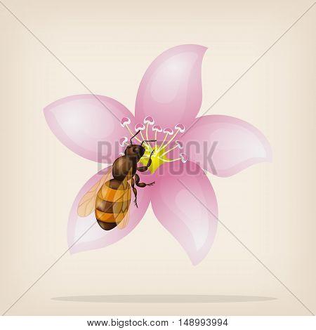 Bee flies on a flower. Vector illustration.