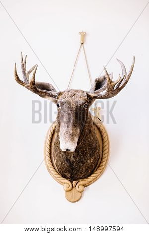 great hunting trophy on the wall white background