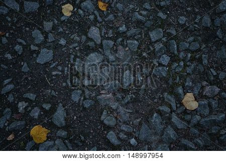 autumn alley ground closeup photo with linden leaves, background