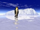 image of h20  - this is landscape a penguin on it - JPG