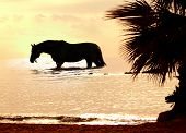 stock photo of beautiful horses  - the horse in marine sunset outdoor evening - JPG