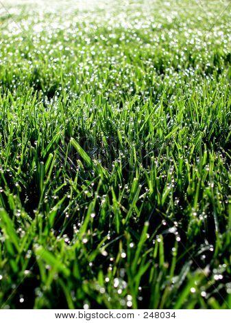 Morning Grass 03