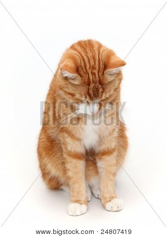 ashamed tomcat