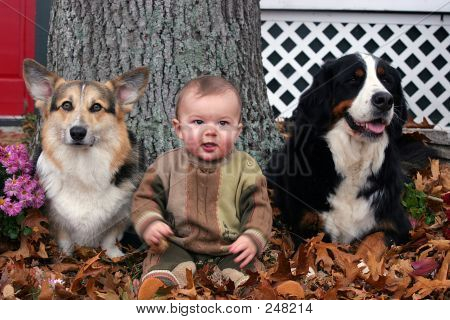 Baby And Two Dogs