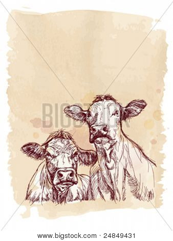 Two cows hand draw sketch & watercolor vintage background. Vector illustration / Eps10