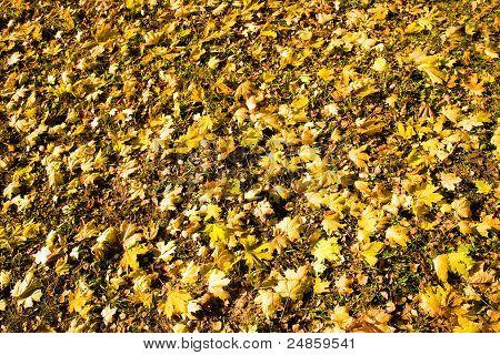 fallen down foliage