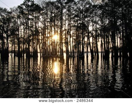 Louisiana Swamp