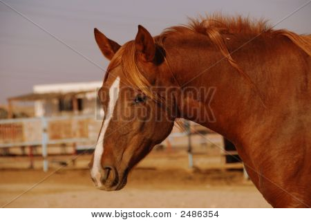 Retrato de un caballo