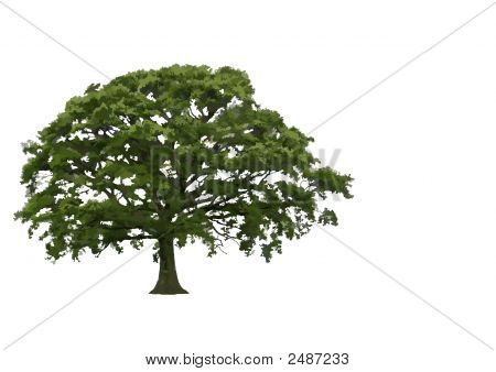 Abstract Summer Oak Tree
