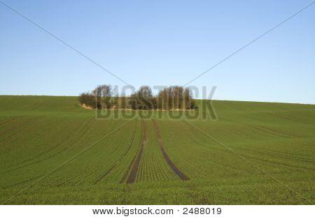 Grove en el campo