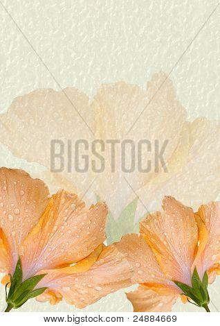 Hibiscus Notepad