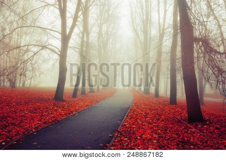 poster of Autumn landscape- foggy autumn park alley with bare autumn trees and dry fallen colorful autumn leaves. Foggy autumn nature - autumn park in the fog, beautiful autumn landscape. Deserted autumn alley in the autumn fog