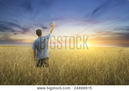 Man On Yellow Wheat Meadow.
