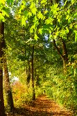 Forest Path With Autumnal Colored Trees poster