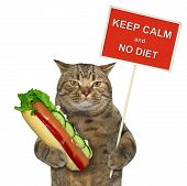 The Cat Holds A Funny Sign  Keep Calm And No Diet  And A Big Hot Dog. White Background. poster