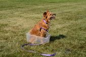 Brown Mixed Breed Dog Sitting Inside Box And Staying In Place To Practice One Trick For Trick Dog Ti poster