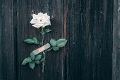 White Rose On A Wooden Background, Pasted Adhesive Bandage. poster