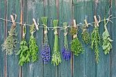 image of upside  - various herbs hanging upside - JPG