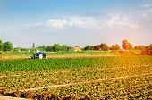 The Farmer Cultivates The Field With A Tractor. Agriculture, Vegetables, Organic Agricultural Produc poster