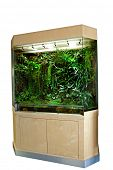 pic of terrestrial animal  - terrarium or vivarium for keeping rainforest animal such as poison frog and lizards - JPG