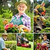foto of senior men  - Various gardening related images in a collage - JPG
