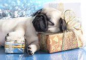 stock photo of christmas puppy  - sleeping  puppy pug and gifts christmas - JPG