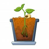 Bean Plant Growing Icon. Cartoon Of Bean Plant Growing Vector Icon For Web Design Isolated On White  poster