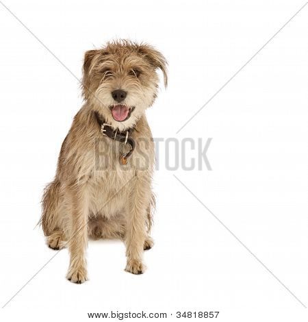 Cute shaggy dog with floppy ears