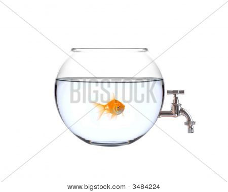 Fish In A Bowl With A Faucet On It