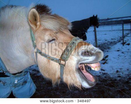 Yawn Horse