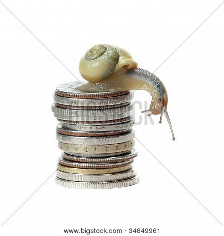Snail On Money