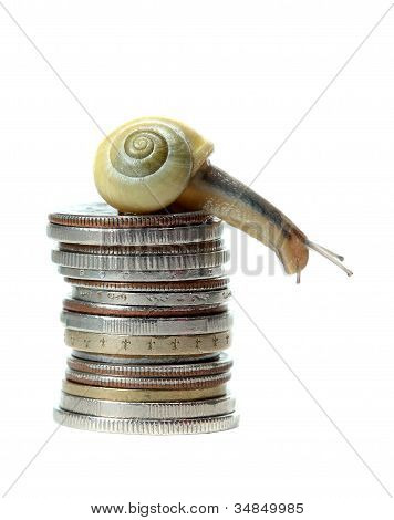 Snail On Top Of Coins