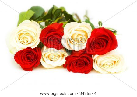 Red And White Roses Isolated