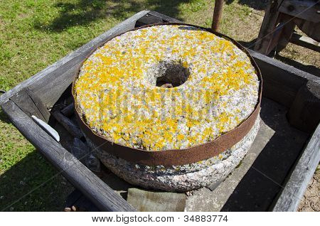 Ancient Millstone With Yellow Lichens