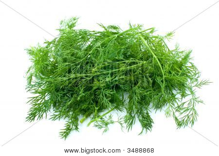 Some Fresh Green Dill