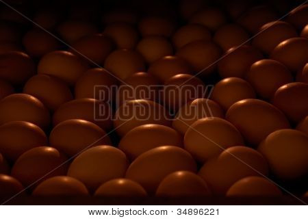 Chicken Eggs In An Incubator