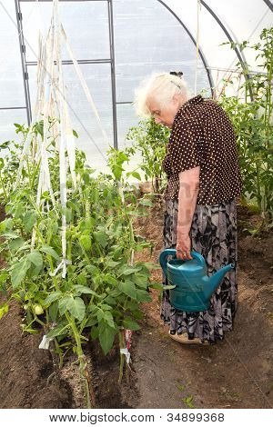 The Old Woman In A Hothouse