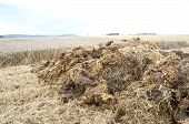 stock photo of gleaning  - Fresh manure heaps at the edge of a cereal field - JPG