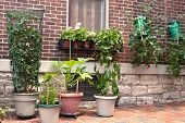 image of movable  - Vegetable container gardening with tomatoes - JPG