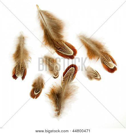 Beautiful decorative feathers, isolated on white