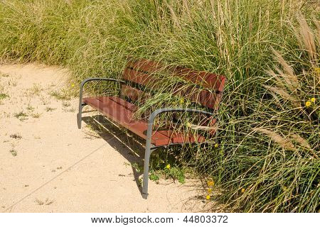 Overgrown Park Bench