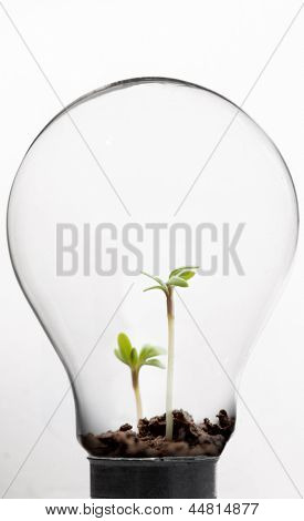 Seedling inside light bulb against white background