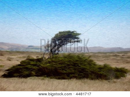 Tree On A Windy Coast
