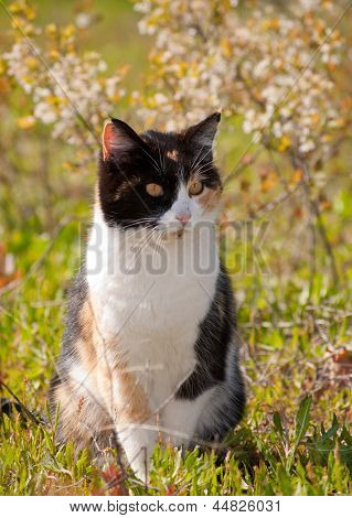 Calico cat in sun with spring flowers