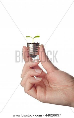 Pplunt growing out of electric light bulb. Eco