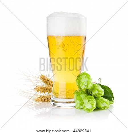 Glass Of Fresh Beer With Green Hops And Ears Of Barley Isolated On A White Background