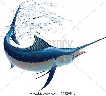 Marlin azul balançando em sprays de água. Ilustração em vetor realista. Isolado no fundo branco.