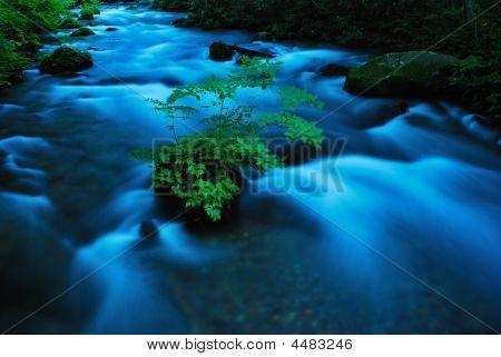 Plant In River